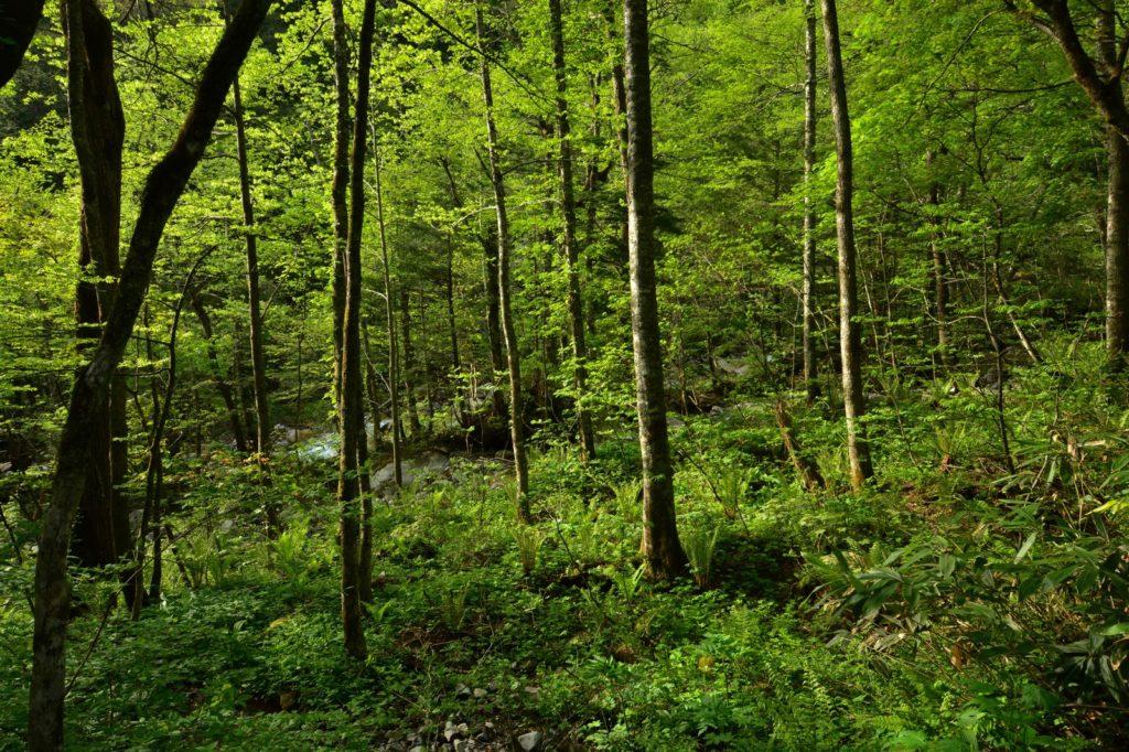 雑多の森の画像